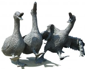 image of laughing ducks